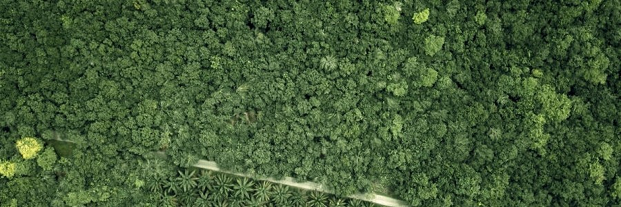 Hutan Kita Bersawit – Gagasan Penyelesaian untuk Perkebunan Kelapa Sawit dalam Kawasan Hutan