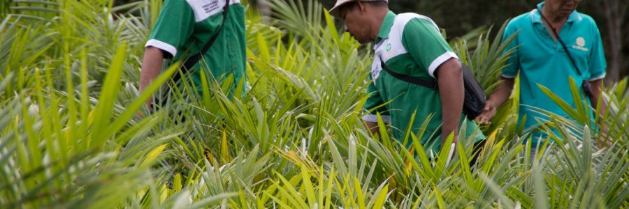Eco-Business |  Palm oil — can we enjoy it responsibly?