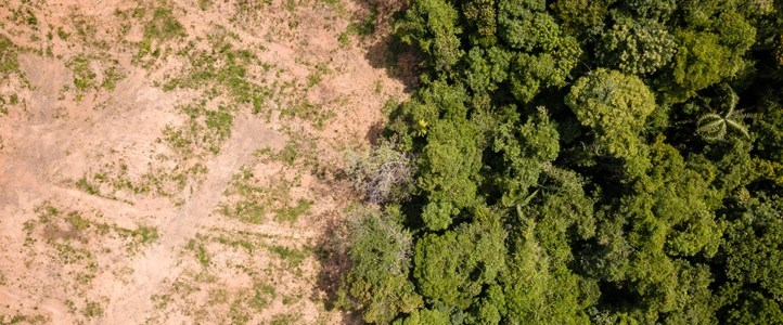edie | European food industry driving deforestation and climate change, report says