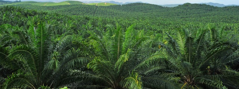 IF |  Are there really any alternatives to palm oil?