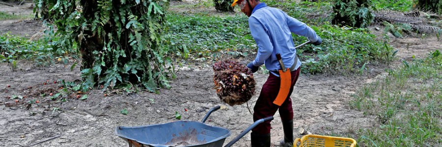 JP | The geopolitics of palm oil and deforestation