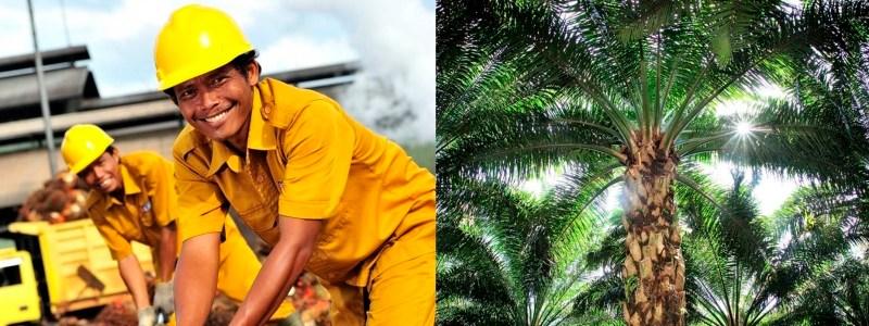 TP | Anti-palm oil lobbies bending the EU's will