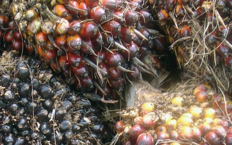 2.-0 LCA | Comparative Life Cycle Assessment of RSPO-certified and Non-certified Palm Oil