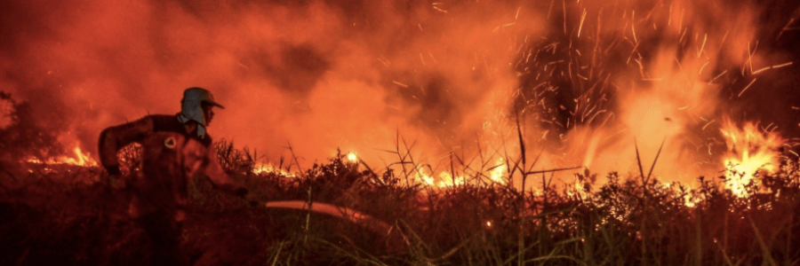 Mongabay | Palm oil from Indonesian grower that burned forest is still being sold