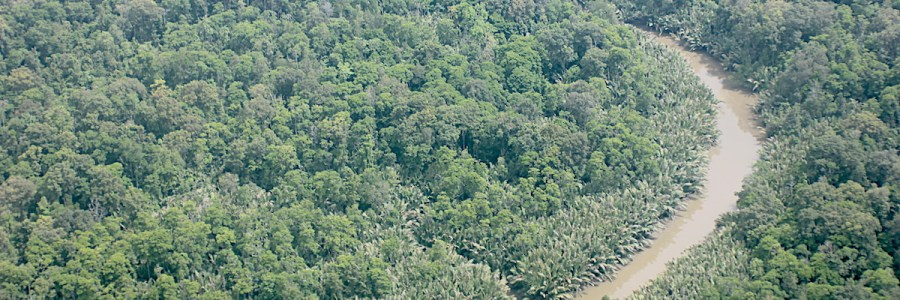 IUCN | Primary forests: a priority nature-based solution