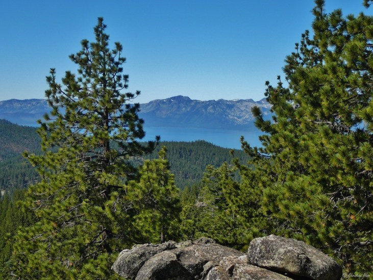 The slopes of the Lake Tahoe basin are again covered with forest.