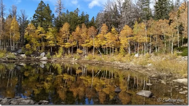 Colorful aspens reflected in the water of Dead Lake.