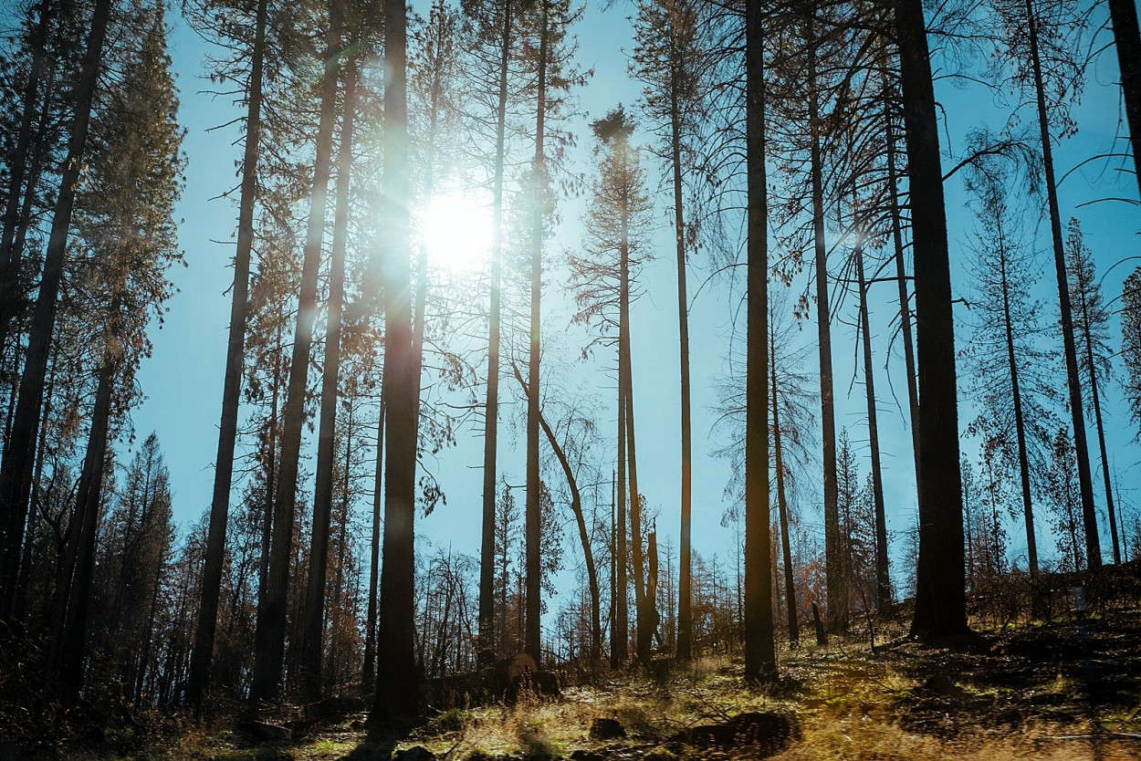 wild-native-photography-blog-yosemite_0002