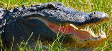 Delta Wildlife Eco Tour