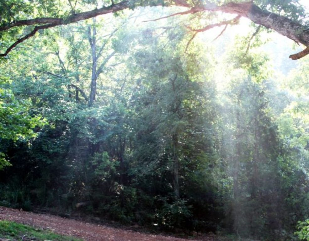 photo of sunbeams