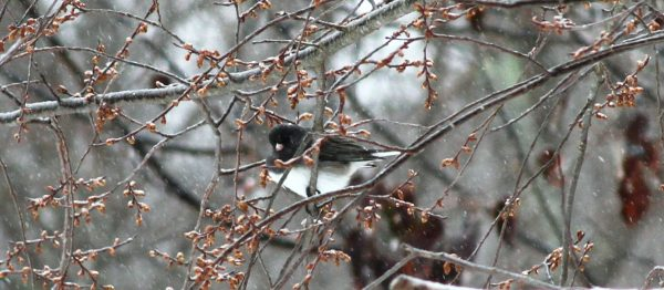cold little bird in the tree