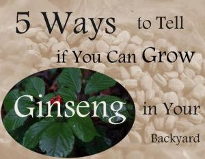 5 ways to tell if you can grow ginseng in your backyard