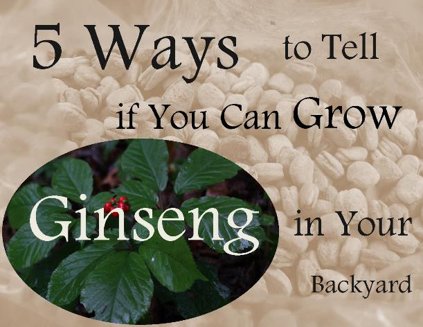 5 Ways to Tell if You Can Grow American Ginseng in Your