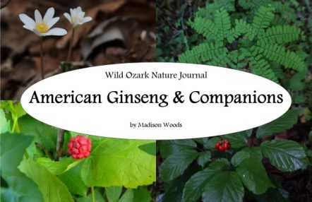 cover for American ginseng & Companions