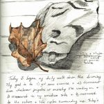 Wild Ozark Nature Journal, Day 1: Leaf and Rock