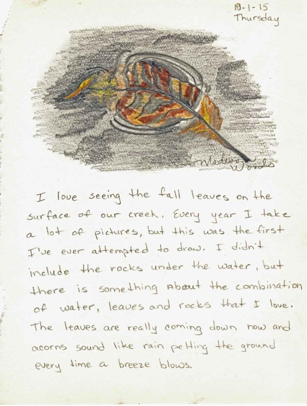 A nature drawing for my Nature Journal series: Leaf on Water