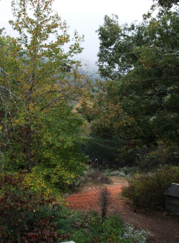 Overcast and misty morning at Wild Ozark with a rain shower so brief it felt like hallucination.