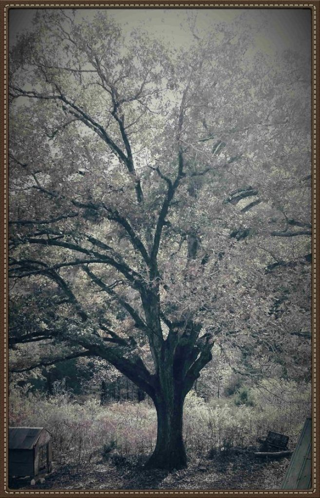 My favorite tree is named Gloria.