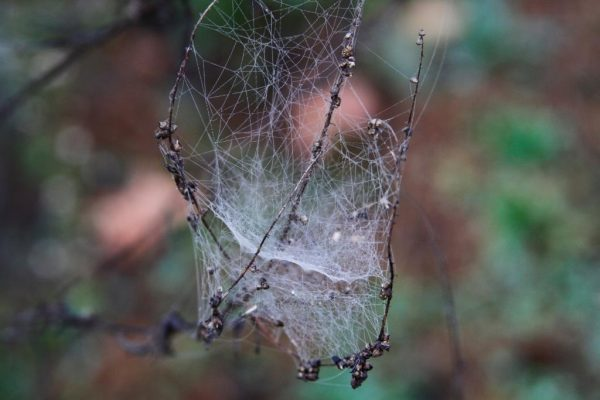 Web of Intricacies