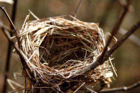 A little bird's nest I spotted just a little off-trail.