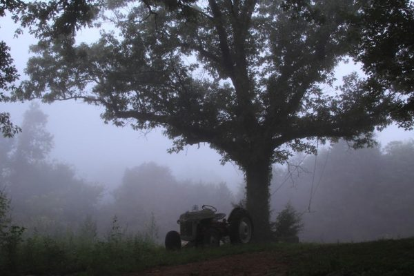 Once a standby for homestead work - Old Ford 8N Tractor