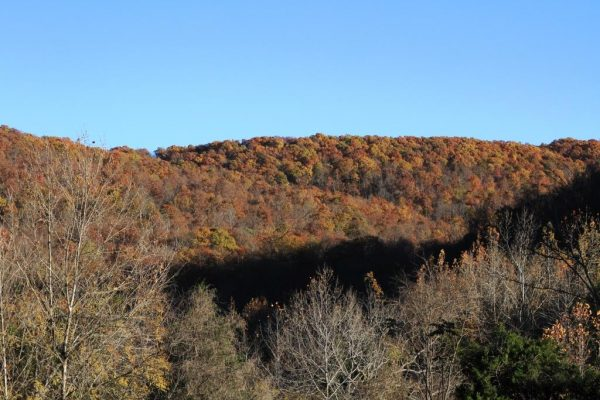 Fall color on the eastern hill.