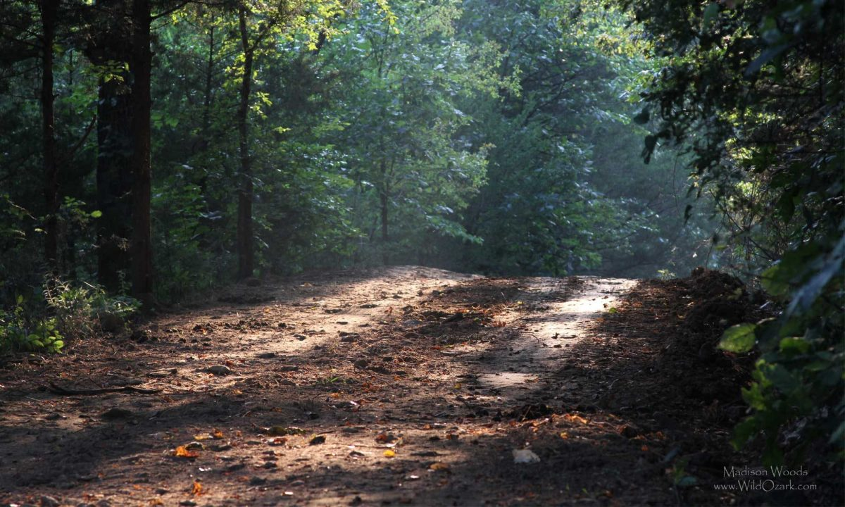 Sunlit dirt road on the way to Wild Ozark.