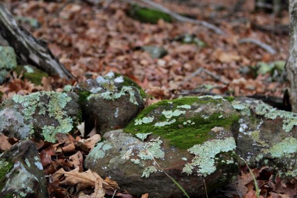 Moss and lichens on the rocks
