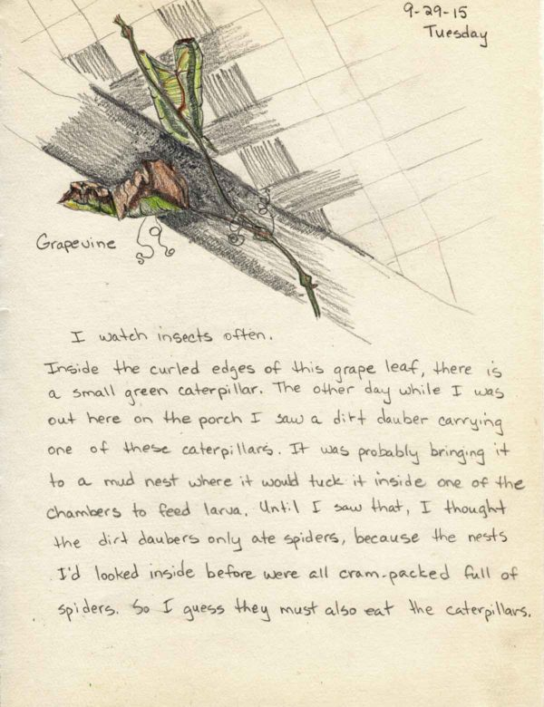 Wild Ozark Nature Journal Entry Day 9: Grape Leaf and Insect Observation