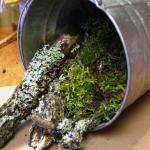 A bucket full of nature farming produce.