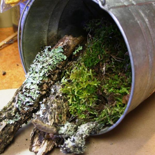 A bucket full of nature farm produce.