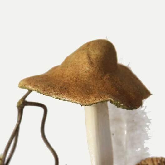 Mushroom cap detail. Serial number 032718-06