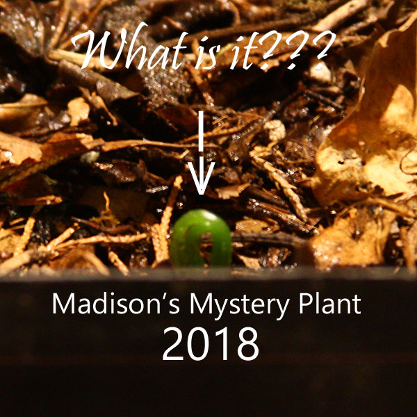 Madison's Mystery Plant
