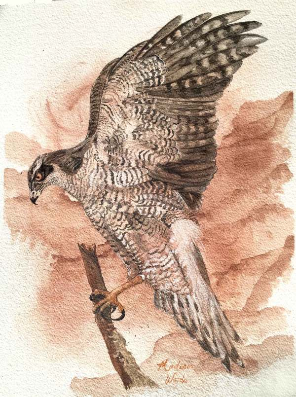 Watercolor painting, Ozark earth pigments by Madison Woods