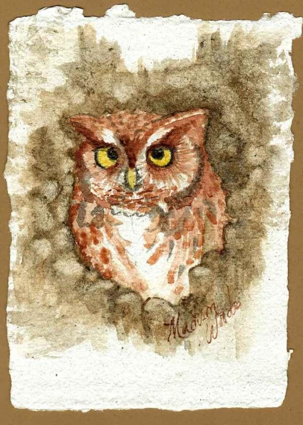 Screech owl painting (quick version).