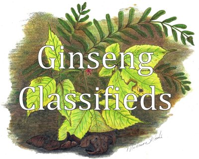 List your roots or buying offers at Wild Ozark's Ginseng Prices page.