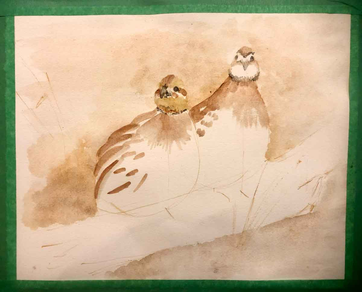 Bobwhite quail painting in progress, using my Ozark pigments. The eyes and beaks have been placed but not finished.