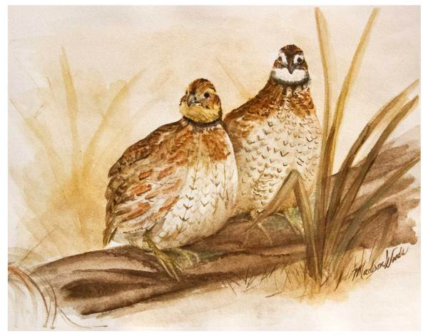 Original painting of northern Bobwhite quail in Ozark pigments.