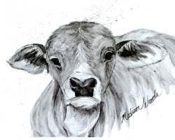 A print of an adorable gray Brahman calf.