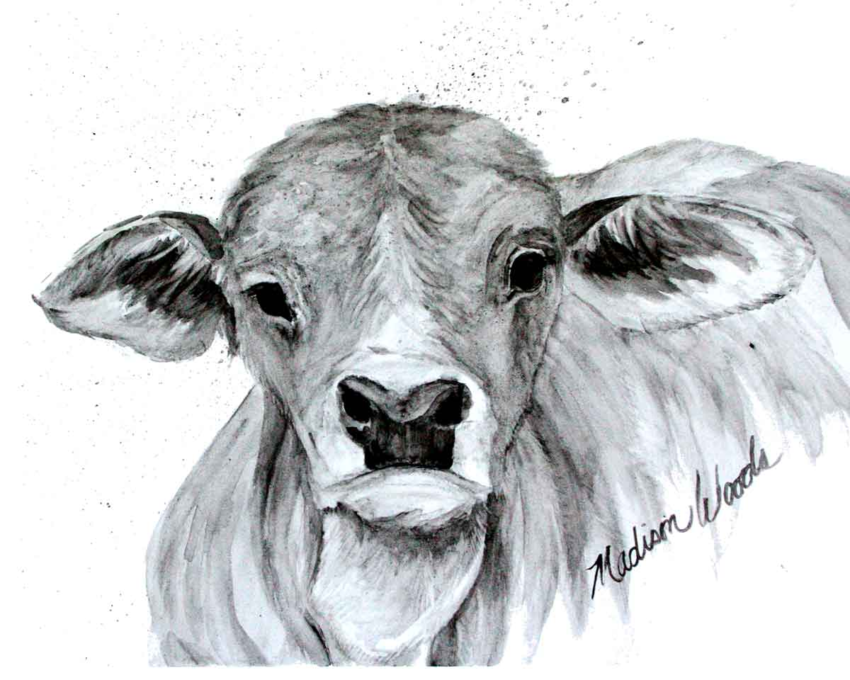 A grayscale art print of an adorable Brahman calf.