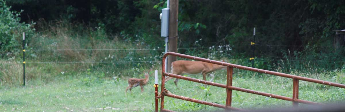 The doe and her fawn who lives out front.