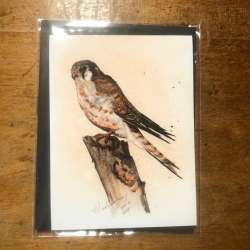 kestrel gift card note card set. Each have envelopes.