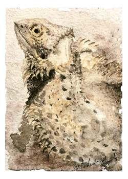 Petunia, the Bearded Dragon