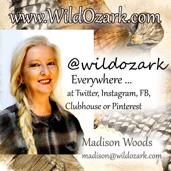 Photo of Madison Woods, artist and Paleo Paint maker, and her social media contact information.