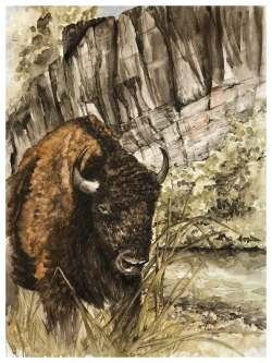 'Namesake', in Ozark pigments by Madison Woods. Buffalo on the shores of the Buffalo National River.