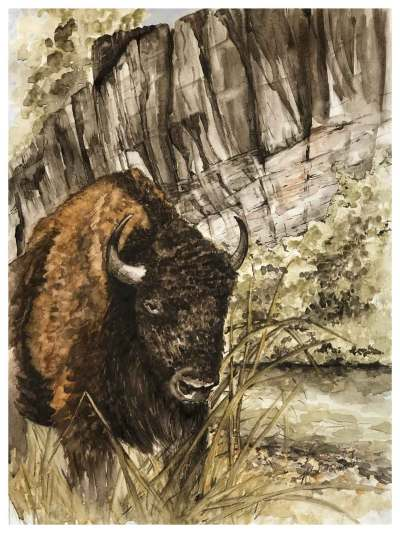 An image of my buffalo/bison painting. Namesake is heading to the Big Apple soon! It'll hang in a show at the Salmagundi Club from Oct. 25-Nov. 5, 2021.