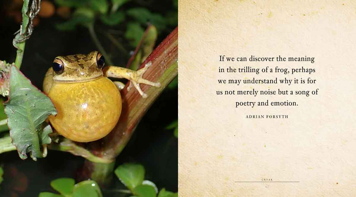 A page from CROAK: A book of fun for frog lovers