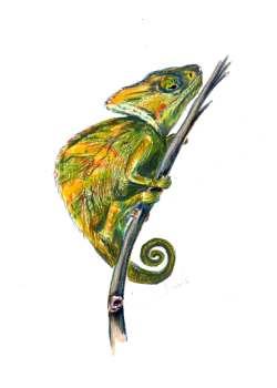 A pet portrait of a chameleon.