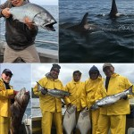 5-26-2016 A releaser lingcod killer whales like salmon too