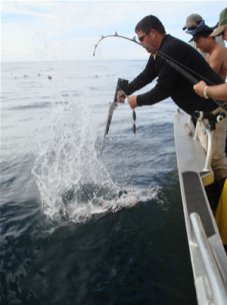 Captain Ching Shooting a Halibut Before Bringing it on Board